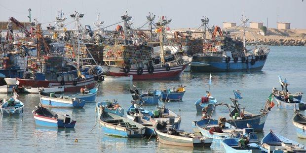 """""""نقابة الصيد البحري"""" تضرب وطنيا و تدعو للكشف عن """"أخطبوطات التهريب"""""""