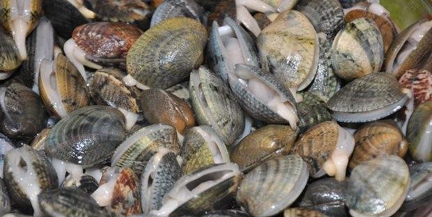 رفع الحظر على صيد الصدفيات بأكادير وسيدي إفني