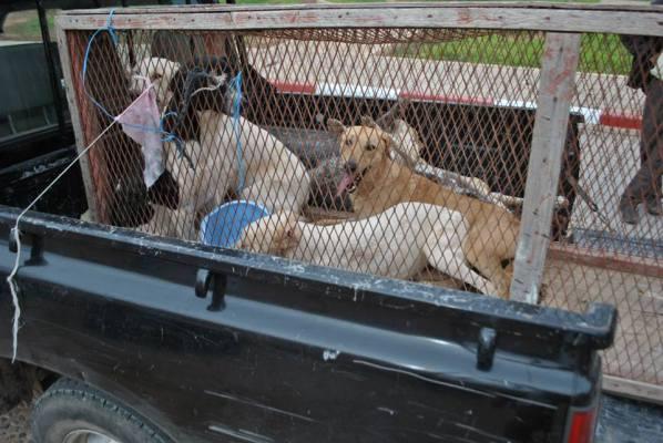"""""""عضَّات الكلاب"""" تتسبب في أزمة بين منتخبي تزنيت ومندوبية الصحة"""