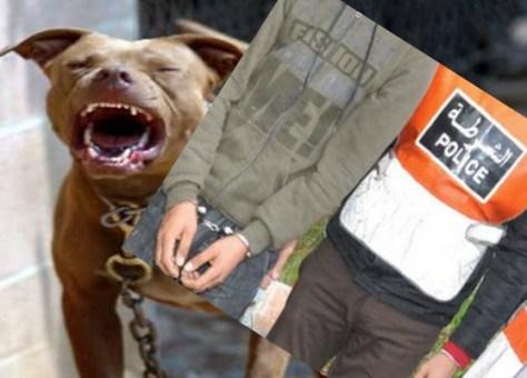 """سقوط عصابة تستعين بـِ """"بيتبول"""" لسرقة ضحاياها بانزكان"""