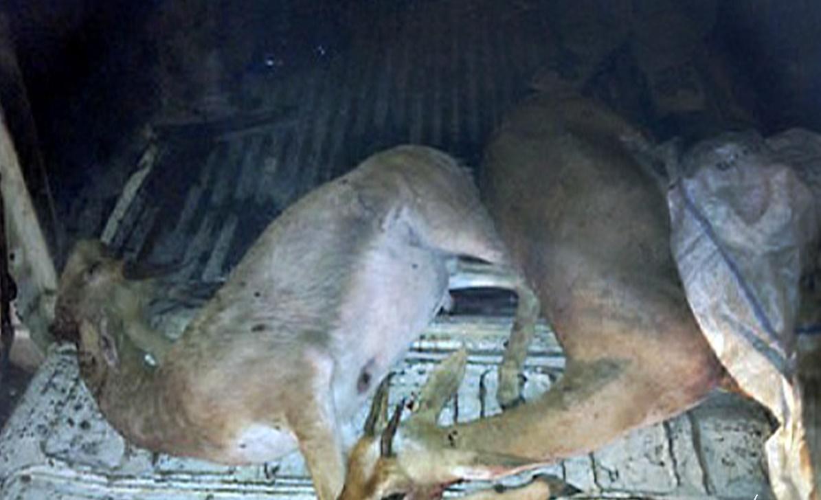 ايقاف 7 أشخاص من بينهم سعوديين بتهمة الصيد العشوائي بنواحي انزي