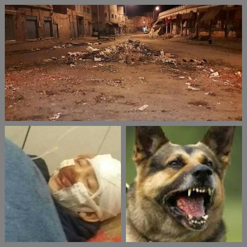 الكلاب الضالة وضالة الكلاب بتيزنيت
