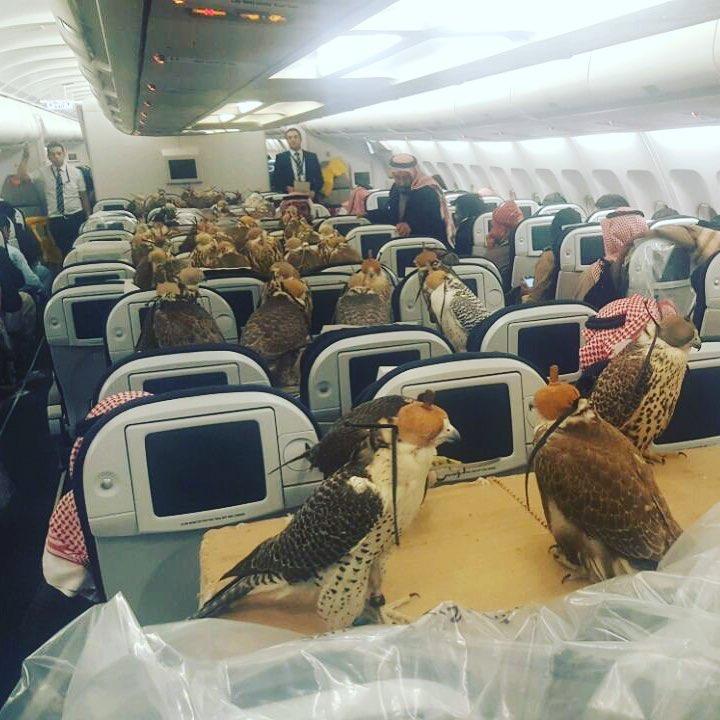 أمير سعودي يحجز 80 مقعدا لصقوره في رحلة جوية