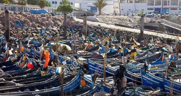 """سمك """"أبو موسى"""" يكشف تلاعبات بالموانئ المغربية"""