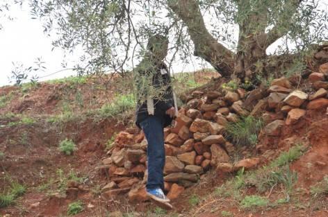 """العثور على جثة عضو من """"البيجيدي"""" معلقة بشجرة الأركان بسوس"""