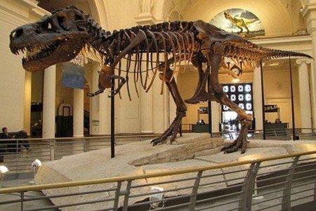 ارجاع الديناصور المغربي المهرب للمغرب