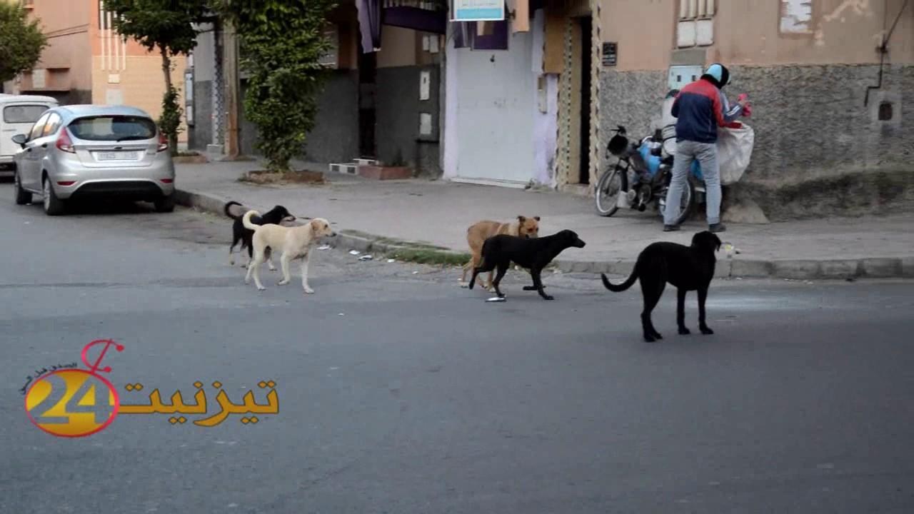 كلاب بتيزنيت