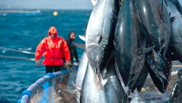 المغرب يوافق على صيد سمك التونة