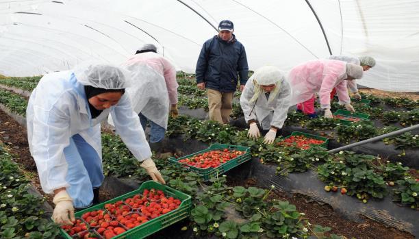 إسبانيا ترخص ل10 آلاف و400 عقد عمل لمزارعين موسميين مغاربة