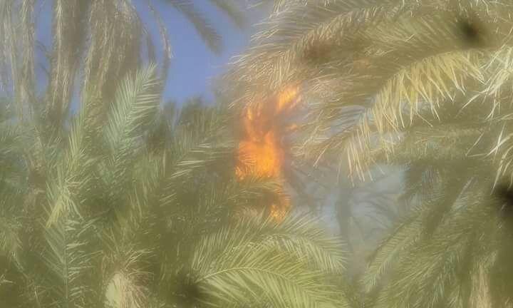طاطا:احتراق مئات الأشجار في حريق مهول بواحة جماعة ألوكوم