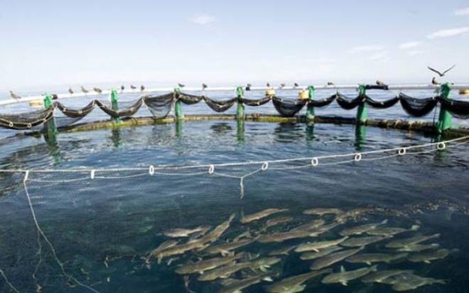يوم للأبواب المفتوحة بسيدي افني حول فرص الاستثمار في تربية الأحياء البحرية