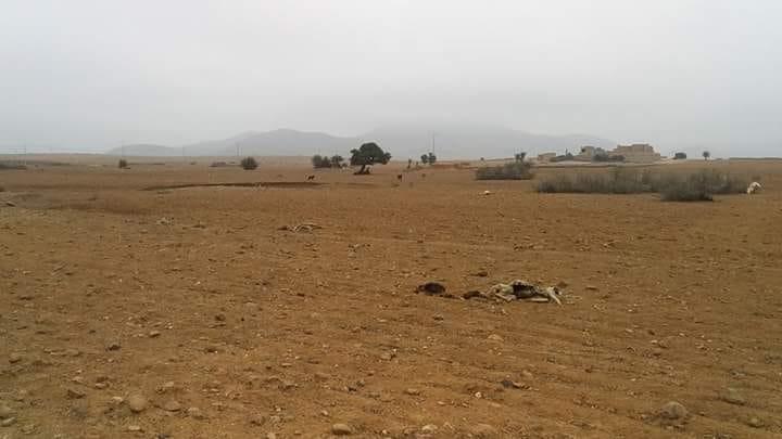 كارثة بيئية تهدد ساكنة جماعة تيوغزة بسبب 30 جثة من الماعز و الاغنام النافقة