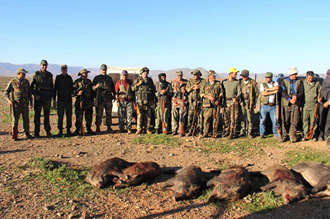 إبادة 160 خنزيرا بعدة مناطق بسوس و الجنوب